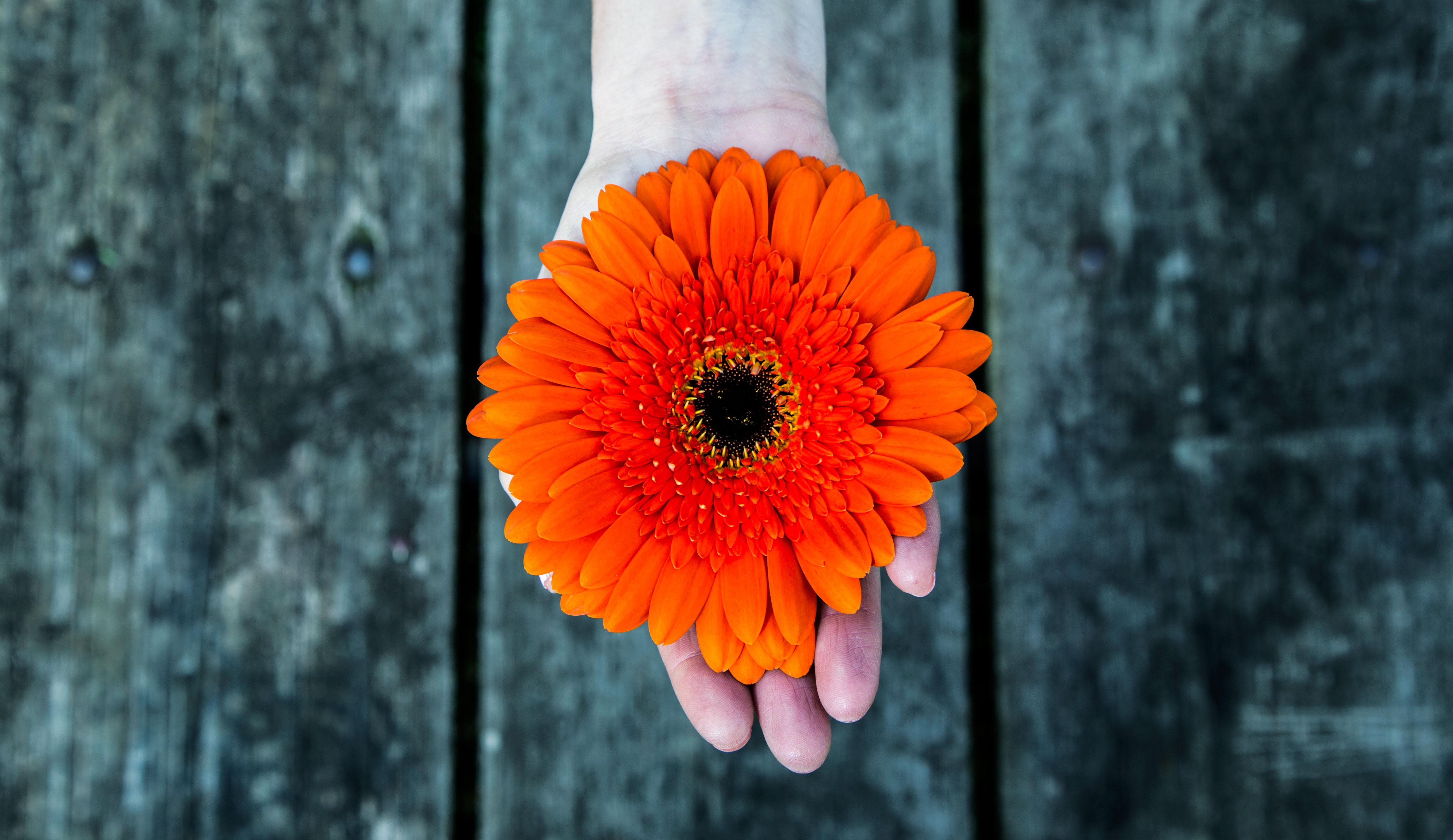 immagine di una mano che porge un fiore